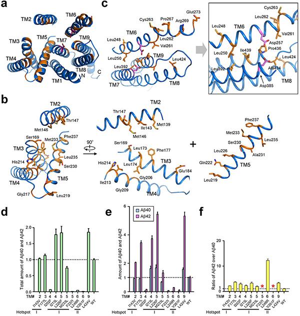 尽管如此,阿尔兹海默症的发病机理尚有待揭示。目前研究已知β-淀粉样沉淀(β-amyloid)是该病的标志性症状之一。而β-淀粉样沉淀的产生是APP蛋白经过一系列蛋白酶切割产生的短肽聚集而来。在此切割过程中,最关键的蛋白酶是γ-分泌酶(γ-secretase)。γ-分泌酶由四个跨膜蛋白亚基组成,分别为Presenilin(PS1)、Pen-2、Aph-1和Nicastrin。其中,编码PS1蛋白的基因中有200多个突变与AD病人相关,而P